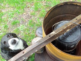 The setup I used to make Biochar at home (the dog is an optional extra)!